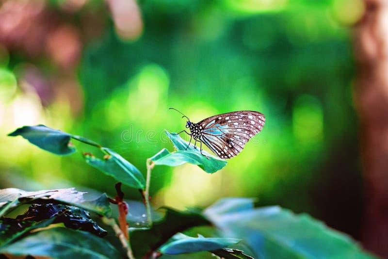 Motyl Na roślinie Z Zielonym Bokeh tłem fotografia royalty free