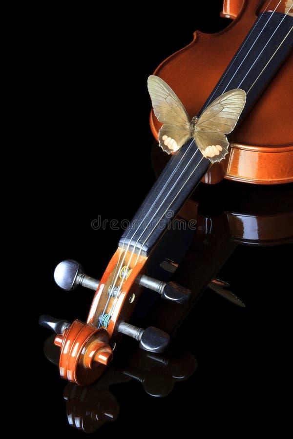 Motyl na skrzypce zdjęcia royalty free