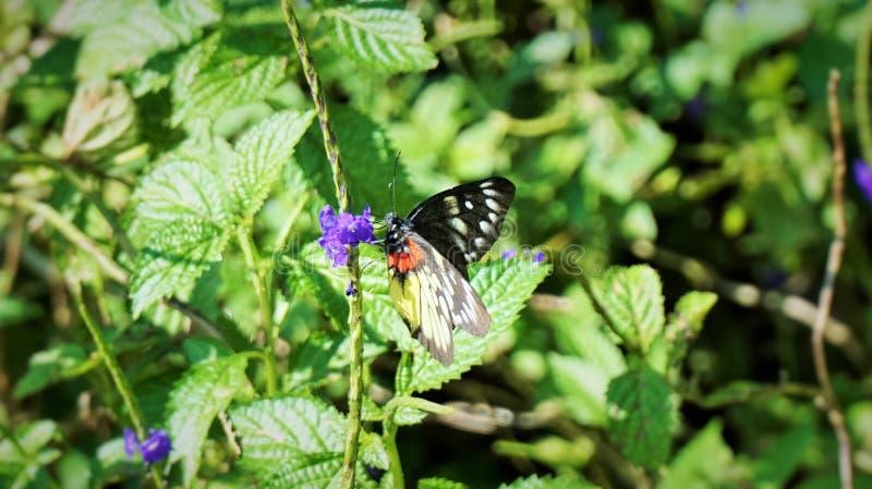 Motyl pije nektar w ogródzie obrazy royalty free