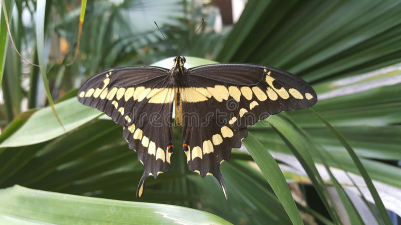 Motyl przy riverwalk obraz stock