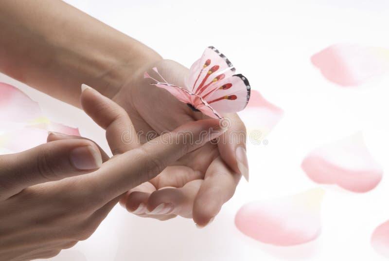 motyl różowy zdjęcia royalty free