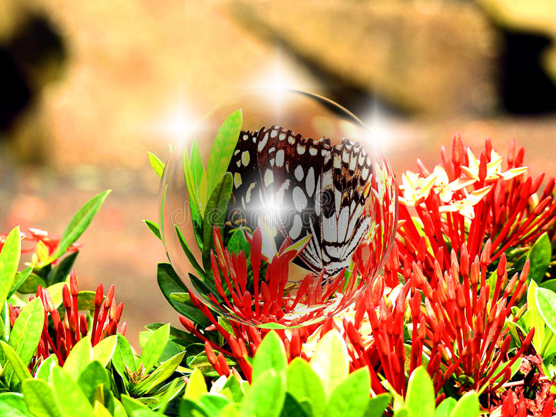 Motyl w bąblach balowych fotografia stock