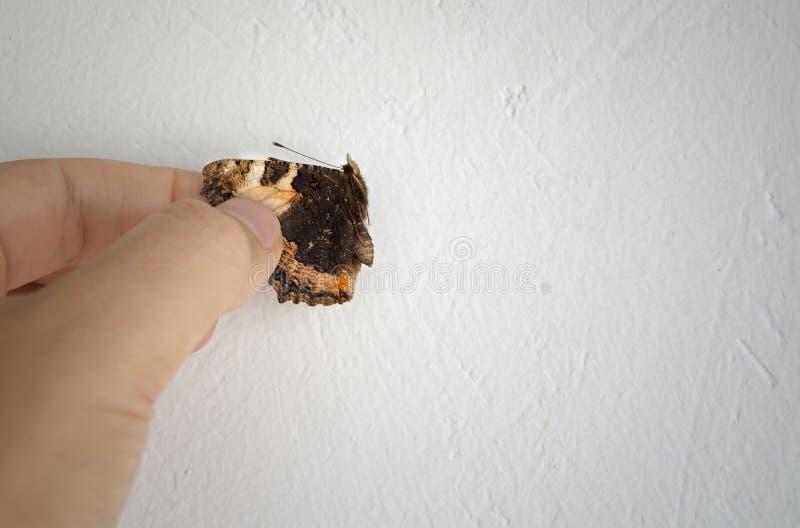Motyl w kobiety ` s ręce W ruchu pojęciu obraz stock