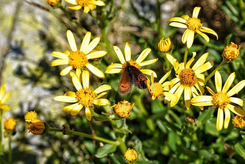 Motyl w kwiatach obraz stock
