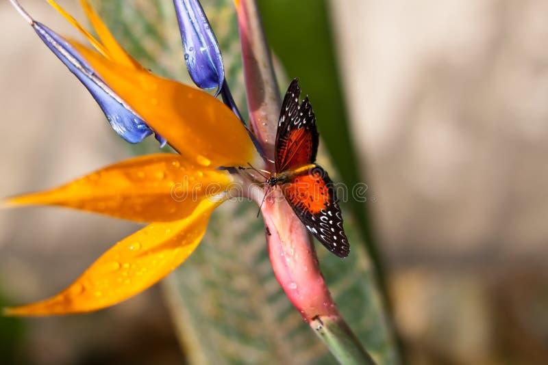 Motyl w kwiecistym ogródzie. obraz royalty free