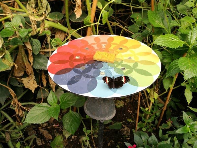 Motyl w Londyńskim zoo obrazy royalty free