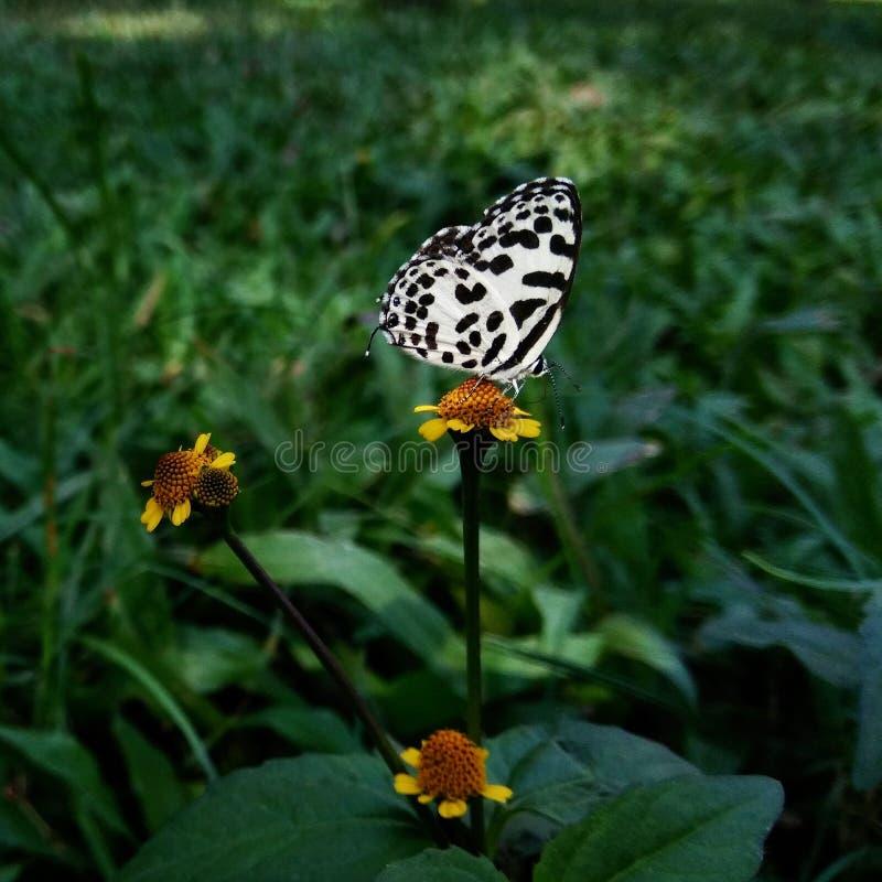 Motyl w mój ogródzie obraz royalty free