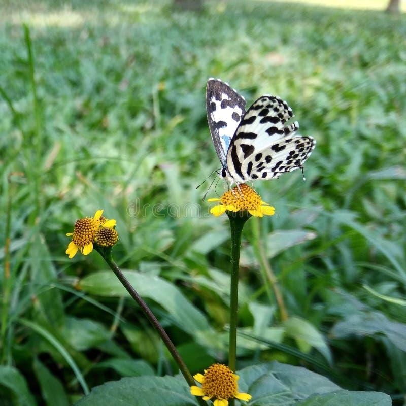 Motyl w mój ogródzie zdjęcia royalty free