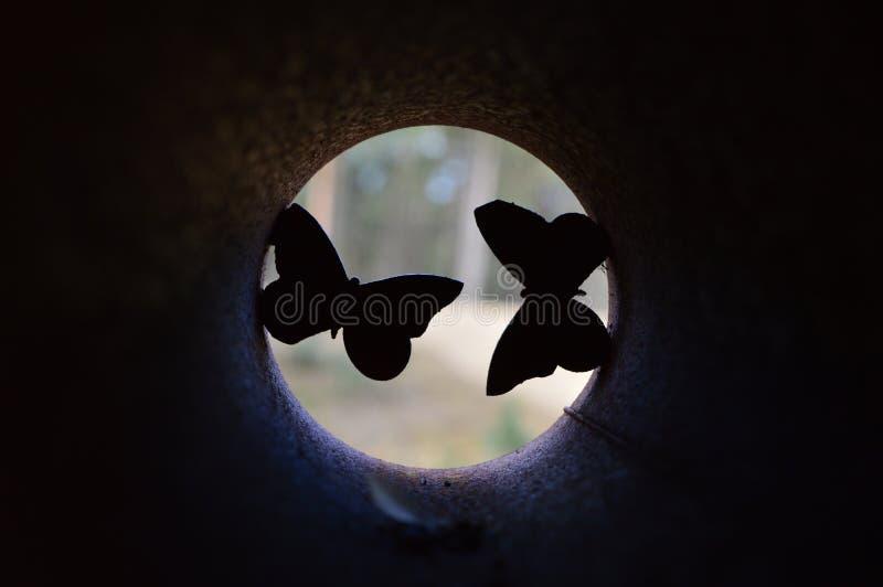 Motyl w Naturepark De Hoge Veluwe zdjęcie royalty free