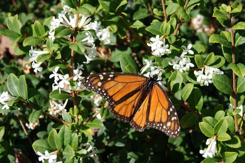 Motyl w ogródzie botanicznym Wellington, Nowa Zelandia zdjęcie royalty free