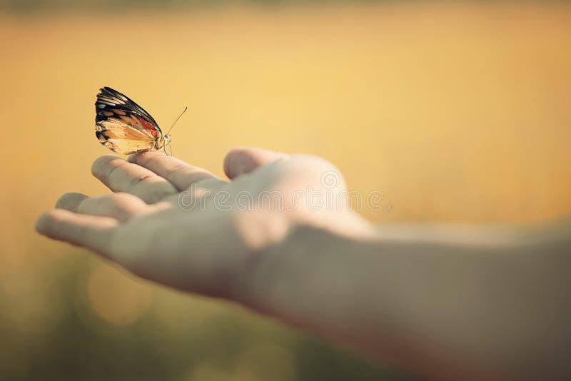 Motyl w ręce obrazy stock