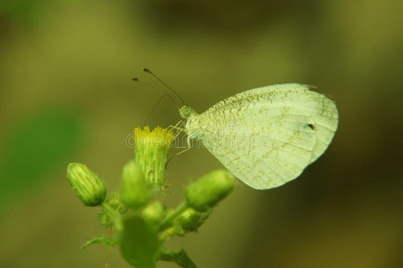 Motyl w wildy przestrzeni zdjęcie stock