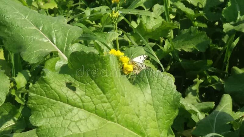 Motyl wewnątrz segregujący dla ciebie zdjęcia stock