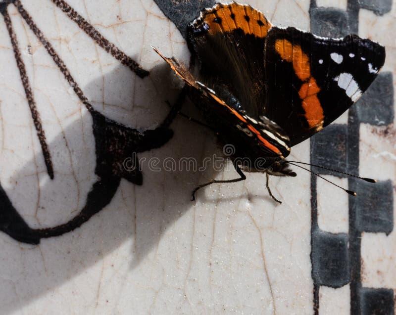 Motyl, zakończenie up obrazy stock