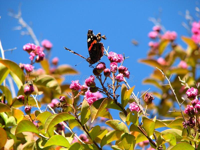 Motyl zbiera nektar na jasnym, kwitnącym letnim dniu, zdjęcie royalty free
