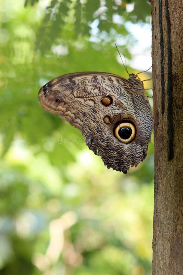 Motyl zwierzęta Wiedza natura Oczyma natury obraz royalty free