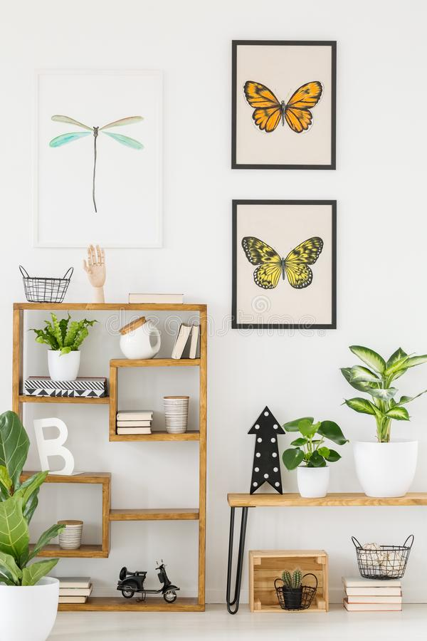 Motyla i dragonfly plakaty na drewnianym shelv i zdjęcia royalty free