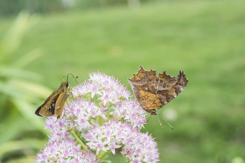 Motyla i kwiatu zakończenie obraz stock