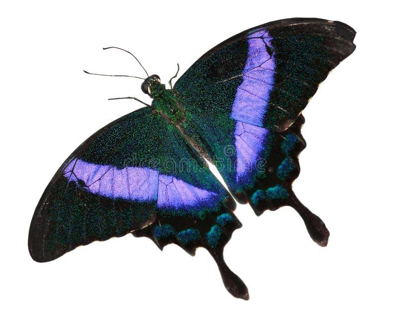 motyla odosobniony biel fotografia stock