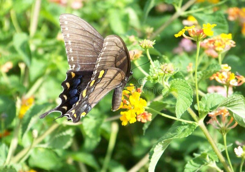 Motyla ogród fotografia royalty free