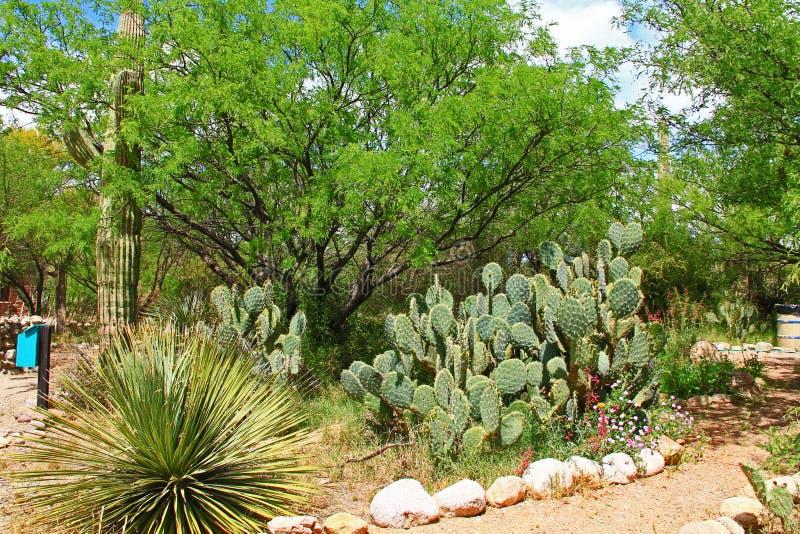 Motyla ogród na losu angeles Posta Quemada rancho w Kolosalnym jamy góry parku fotografia royalty free