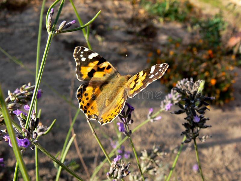 Motyla sen! fotografia stock