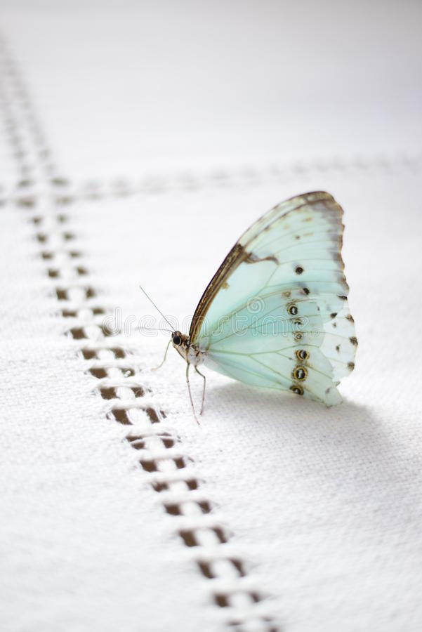 Motyla sen zdjęcia stock