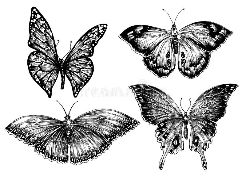 Motyla set ilustracji
