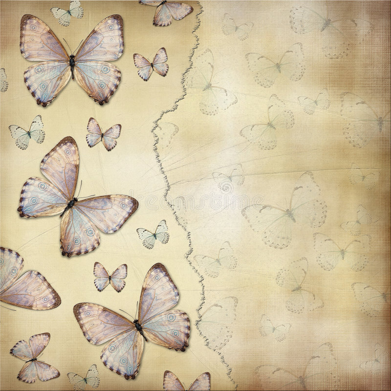 motyle ilustracji