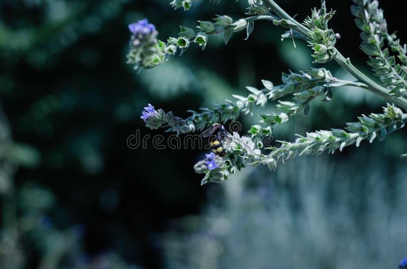 Motyle i insekty zbierają słodkiego nektar od dzikich wildflowers Wielka selekcyjna ostrość zdjęcie stock