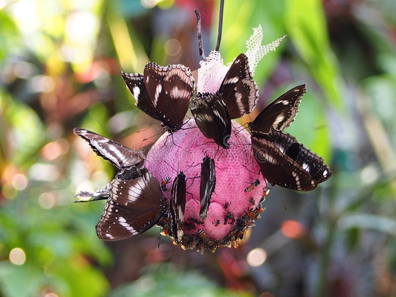 Motyle i pszczoły w motyla ogródzie obraz royalty free