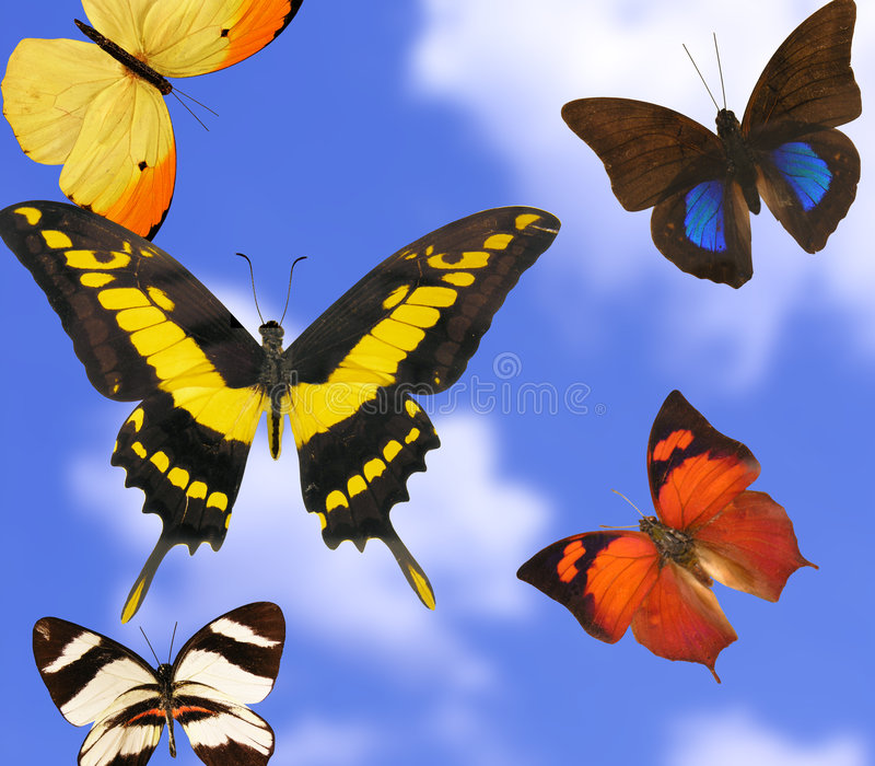 motyle kolor zdjęcia stock