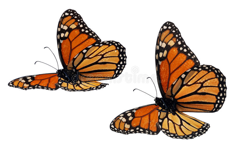 motyle monarchiczni royalty ilustracja