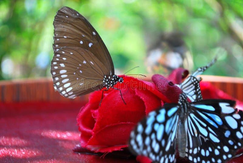 Motyle na czerwonym kwiacie fotografia royalty free