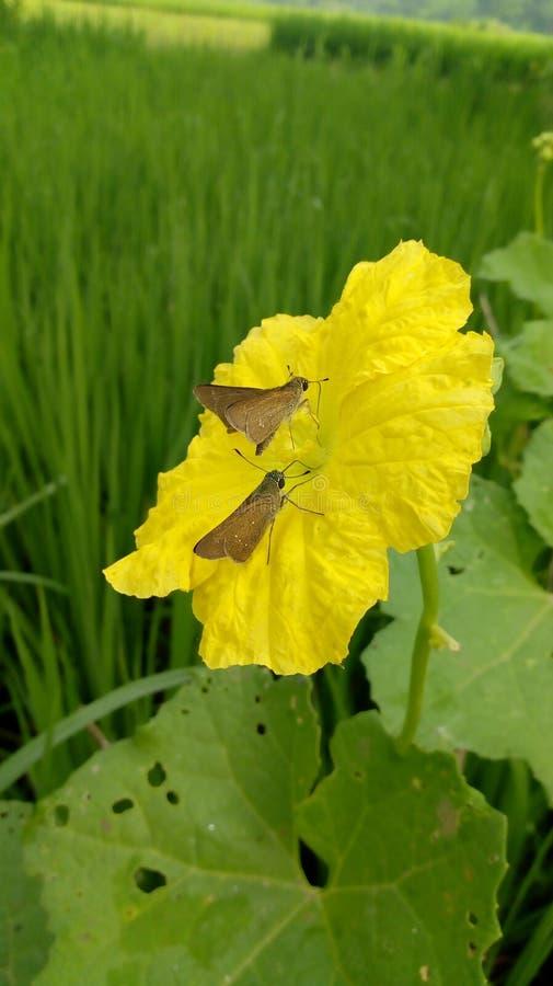 Motyle na kwiacie obrazy stock
