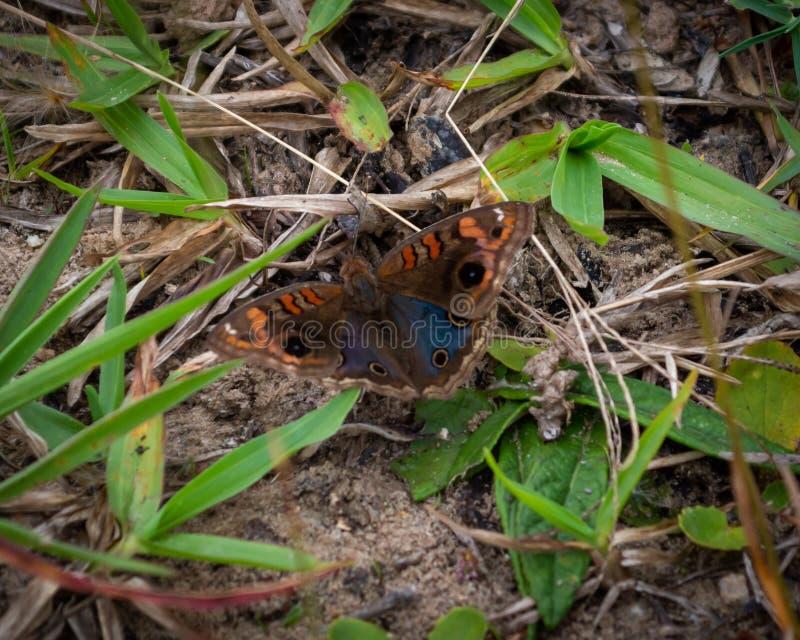 Motyle na ziemi Brasil Natural zdjęcia stock