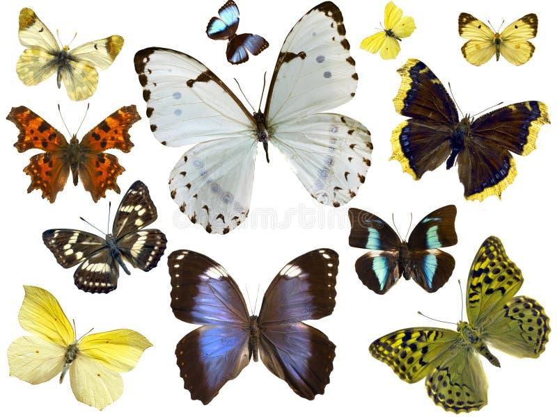 motyle odizolowane fotografia stock