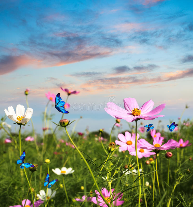 Motyle target508_1_ w kwiatach zdjęcie royalty free