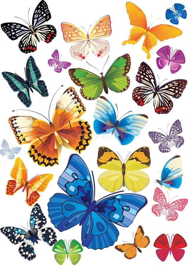 motyle ustawiający ilustracja wektor