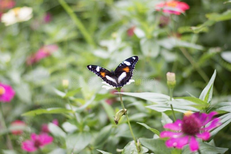 Motyle w kwiatu ogródzie obraz stock