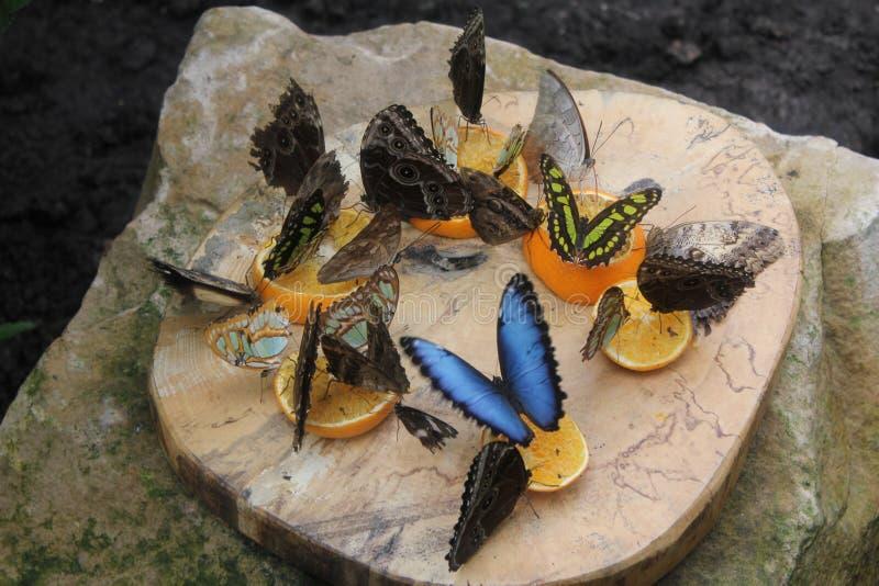 Motyle w motylach ogrodowych fotografia stock