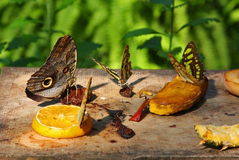 Motyle w ogródzie fotografia stock