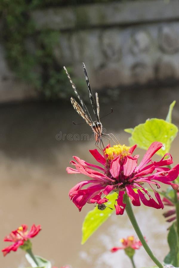 Motyle w pięknym kwiatu ogródzie zdjęcia royalty free