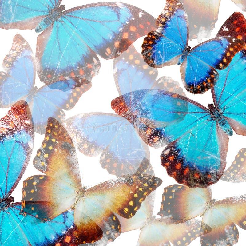 motyle w tle ilustracji