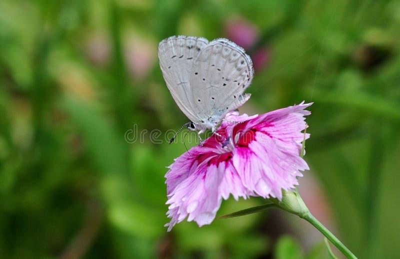 motyli biel obraz stock