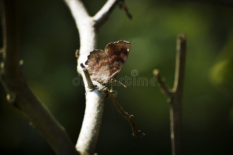 Motyli ciemny tło zdjęcie royalty free