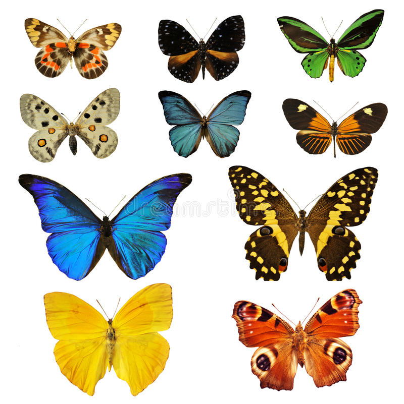 motyli colorfull obrazy stock