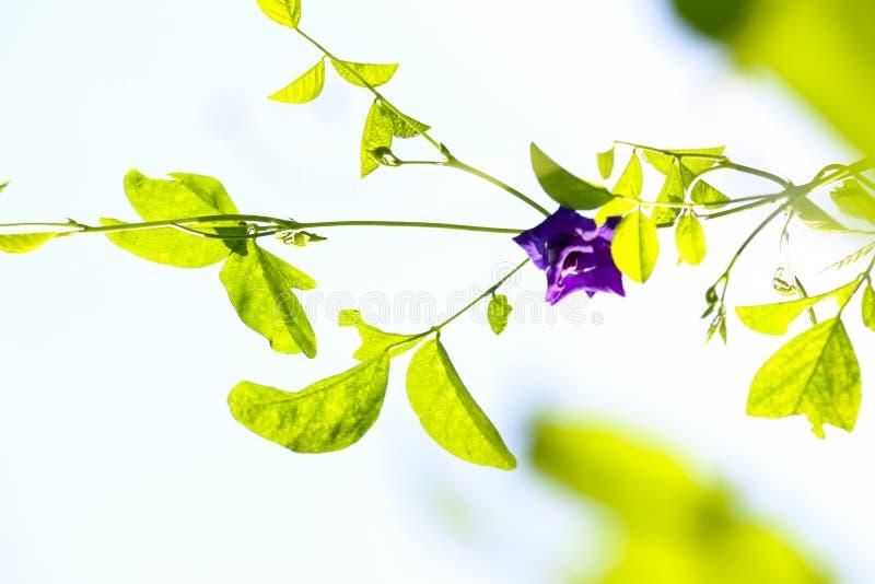 Motyli groch przy ogródem obraz royalty free