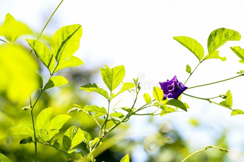 Motyli groch przy ogródem zdjęcie stock