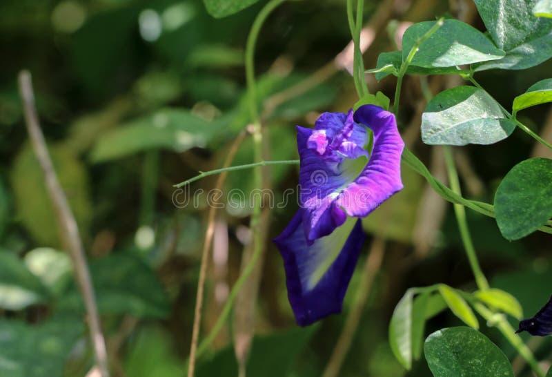 Motyli groch przy ogródem fotografia stock